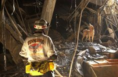 Trained rescue dog Gus and his trainer Ed Apple from the Tennessee Task Force One Search & Rescue team searching for survivors in the wreckage at the Pentagon. (Photo by Mai/Mai/Time Life Pictures/Getty Images) Search And Rescue Dogs, Dog Search, World Trade Center Collapse, World Trade Towers, United States Secret Service, 911 Never Forget, Army Reserve, Life Pictures, September