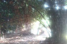 Weekly Photo Challenge: Refraction. Foto cahaya dan rumpun bambu diatas menurut saya cukup mewakili tema 'refraction' atau pembiasan atau pembelokan cahaya. Salah satu efek dari pembiasan cahaya ad...