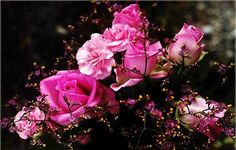 Beautiful world. added 99 new photos to the album: Flowers 22 — with Menşure Kav and 130 others. Beautiful Roses, Pink Roses, Plants, Flowers, Planters, Plant, Planting