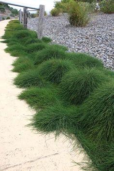 How To Use Succulent Landscape Design For Your Home Succulent Landscaping, Succulents Garden, Garden Landscaping, Australian Native Garden, Australian Plants, Back Gardens, Small Gardens, Landscape Design, Garden Design