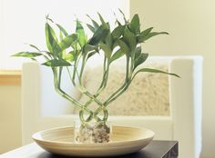 feng shui lucky bamboo - ML Harris/Getty Images