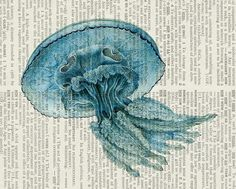 jellyfish I - vintage blue jelly fish printed on page from old dictionary