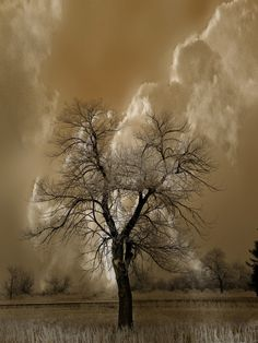 In waiting  (via 500px / 3413 by peter holme iii)