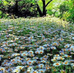 163 Fantastiche Immagini Su Prati In Fiore Beautiful Flowers
