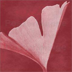 Gingko Blatt rot Poster von Christine Bässler