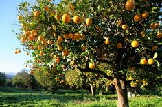 How to Start a Mini Backyard Orchard