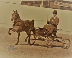 Frisco Charming, 1st 3 year old Futurity, Bakersfield, CA, 1968, M  Joyce driving.