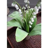 Large Lily of the Valley