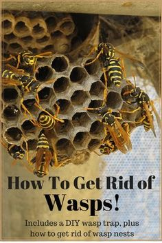 Find out how to get rid of wasps with a very effective DIY homemade wasp trap and some other safe and natural methods that kill and repel wasps and hornets. Wasp Trap Diy, Homemade Wasp Trap, Wasp Traps, Get Rid Of Wasps, Bees And Wasps, Diy Pest Control, Weed Control, Bug Control, Garden Bugs