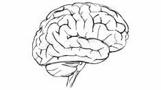 human brain sketch - Google Search