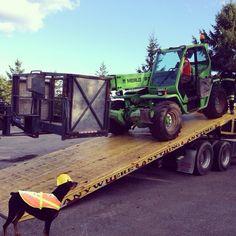 #dogswithjobs #boomlift #merlo #aerial #equipment #boomlifts4sale.com #doberman #dobie #foreman