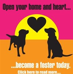 Labradors and Friends--another wonderful rescue in San Diego.