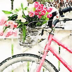 Bicycles and Tulips
