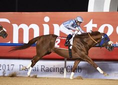 Long River (USA) 2010 Ch.h. (A.P. Indy (USA)-Round Pond (USA) by Awesome Again (CAN) 1st Al Maktoum Challenge R3 (UAE-G1,2000mD,Meydan) (photo: DRC/Andrew Watkins)
