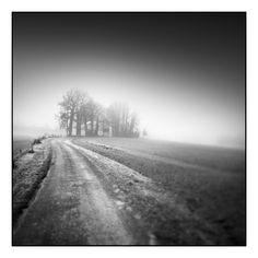 photographie noir et blanc de paysage embrumé : photo noir et blanc de route, brouillard, bosquet d'arbres - black and white photography of landscape : photo of trees, road, fog