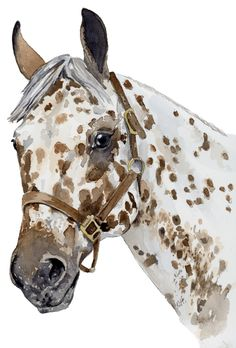 Easy Horse Drawing, Horse Drawings, Cool Art Drawings, Animal Drawings, Art Sketches, Watercolor Horse, Watercolor Paintings, Watercolour, Horse Artwork