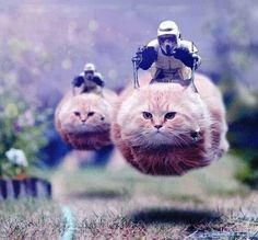 Star Wars hovercat.