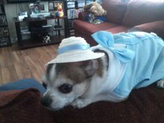 my dog modles his new outfit for Easter!