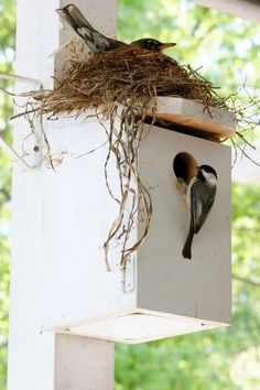 17 Unusual Bird Nests Built In The Oddest Of Places