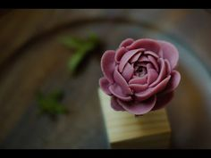 [English Sub] How to pipe Peony 豆沙裱花——芍药 Buttercream Flowers Tutorial, Korean Buttercream Flower, Buttercream Flower Cake, Icing Flowers, Sugar Flowers, Cake Decorating Techniques, Cake Decorating Tutorials, Rose Cake, Peony Cake