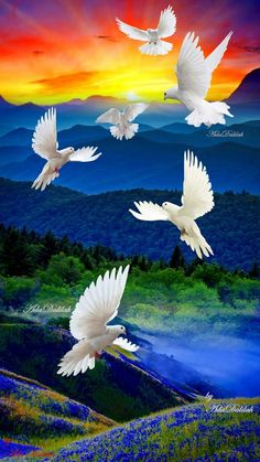 Dove Images, Dove Pictures, Scenery Pictures, Jesus Pictures, Beautiful Nature Pictures, Beautiful Nature Wallpaper, Beautiful Rose Flowers, Beautiful Birds, Nicolas Vanier