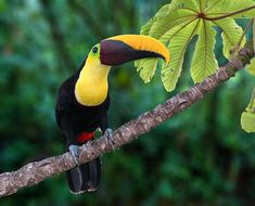 rainforest animals | Flashy: Many rainforest animals produce a bright plumage so that they ...