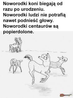 Very Funny Memes, Wtf Funny, Funny Cute, Funny Images, Funny Pictures, Hahaha Hahaha, Funny Lyrics, Polish Memes, Funny Mems