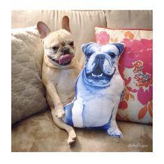 English Bulldog Blue shaped pillow Blue Throw Pillows, Kids Pillows, Decorative Cushions, Soft Hands, Big Boys, Bulldogs, All The Colors, Happy Shopping, French Bulldog