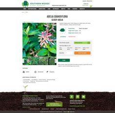 Southern Woods Plant Nursery Ecommerce Web Site By Limelight Online Christchurch Design
