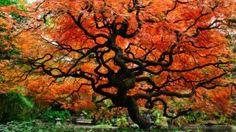 l'autunno alle porte