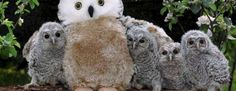 These Poor Baby Owls Lost Their Mother, So Their Rescuers Gave Them a Stuffed Owl to Bond With