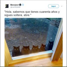 Gatos expectantes