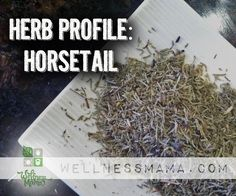 Herb Profile: Horsetail Herb Uses and Benefits - Wellness mama