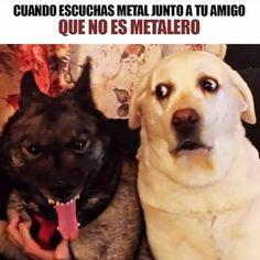 Verdad? XD - - - - - - #musica #heavymetal #music #perros