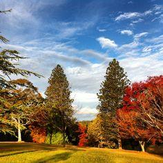 Autumnal Colours #NewEngland #Uralla #NSW #Australia #Autumn #Fall