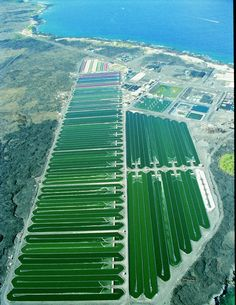 Aerial shot of our Spirulina and Astaxanthin farm on the Big Island of Hawaii