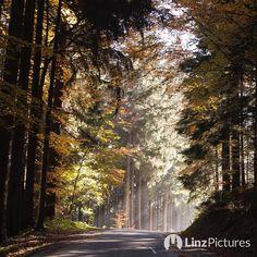 #fall  . . . . . . . #herbst in #lichtenberg bei #linz #igerslinz #autimn #wanderlust #travelblogger #wandern #outdoor #action #fromwhereistand #whereami #upperaustria #countryside #mühlviertel #igersaustria #sunny #instaweather #mood #potd #sun #view