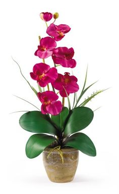 Nearly Natural 1016-BU Phalaenopsis Silk Orchid Flower Ar... https://www.amazon.com/dp/B00AUSDWHU/ref=cm_sw_r_pi_dp_x_R7UcybGVHQW40