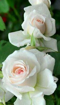Vintage French Soul ~    Roses