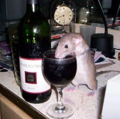 This is why I have to make sure my coffee is empty before letting rats on my desk....lol