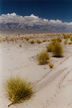 USA - California - Death Valley - Desert landscape