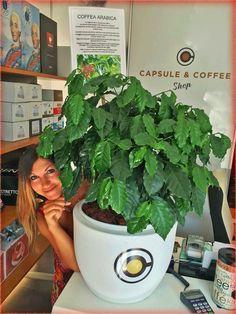 #Coffea #Arabica #Fano #Capsule #Coffee  Viale Veneto 87 Tel 0721-823785