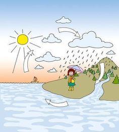 Was ist eine Wolke? Wie entstehen Wolken? Wo kommt das Wasser her? Wo geht das Wasser hin, wenn eine Pfütze trocknet? ... Das sind typische Fragen von Kindern im Kindergartenalter! Auch wenn der Wasserkreislauf als solcher eher ein Thema für die Grundschule ist, finde ich es immer wieder faszinierend zu erkennen, dass auch Kindergartenkinder sich für das Prinzip interessieren und es sehr schnell verstehen. Das eine Experiment zum Wasserkreislauf habe ich bisher nicht gefunden, sondern aus…