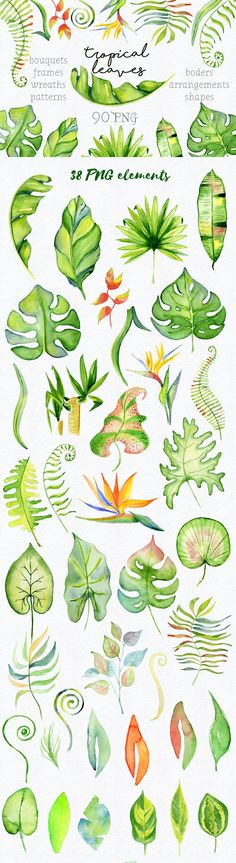 Tropical leaves Watercolor clipart by Evgeniia on @creativemarket