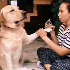 Cute Puppy Videos, Cute Animal Videos, Funny Animal Videos, Funny Animal Pictures, Videos Funny, Pet Videos, Cute Dog Pictures, Cute Funny Dogs, Funny Cats And Dogs