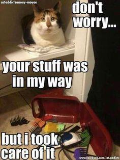 Ha. Totally my cats!