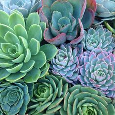A plethora of succulents!