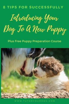8 Tips For Successfully Introducing Your Dog To A New Puppy - Tutor Your Dog Tips for creating a positive introduction between your dog and the new puppy. Learn how to successfully introduce your dog to the new puppy. Free Puppies, Puppies Tips, Yorkie Puppies, Funny Puppies, Training Your Puppy, Dog Training Tips, Brain Training, Dog Minding, Easiest Dogs To Train