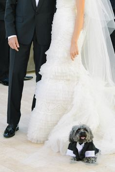 And a tuxedo for the pup too! Photography By / http://sylviegilphotography.com,Event Planning By / http://kathyhigginsweddings.com