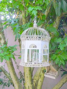 Love open bird cages